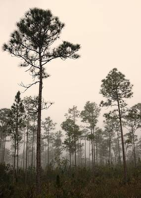 Slash Photograph - Early Morning Fog Landscape-2 by Rudy Umans