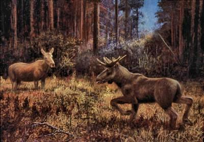Genio Painting - Elk by Genio GgXpress