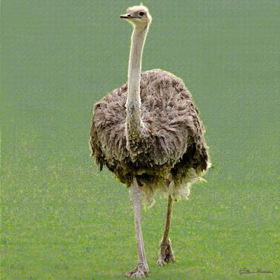 Emu Print by Ellen Henneke