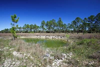 Everglades Restoration Print by Jim West