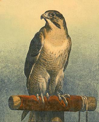 Falcon Print by Sir Edwin Landseer