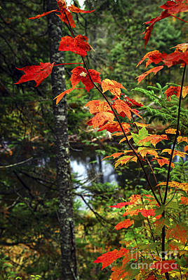 Creek Photograph - Fall Forest And River by Elena Elisseeva