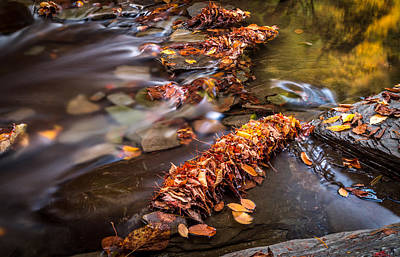 Fall Leaves Print by Gary Fossaceca