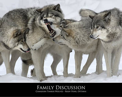 Wolves Photograph - Family Discussion by Rudy Pohl