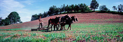 Amish Farmer Photograph - Farmer Plowing Field With Horses, Amish by Panoramic Images