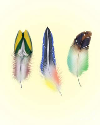 Abstract Wildlife Digital Art - Feathers by Mark Ashkenazi