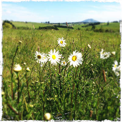 Field Of Flowers Print by Les Cunliffe