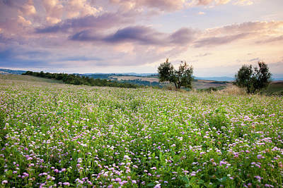 Field Of Wildflowers At Sunset Print by Brian Jannsen