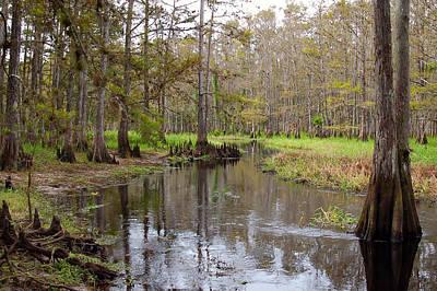 Fisheating Creek Photograph - Fisheating Creek by Rich Leighton