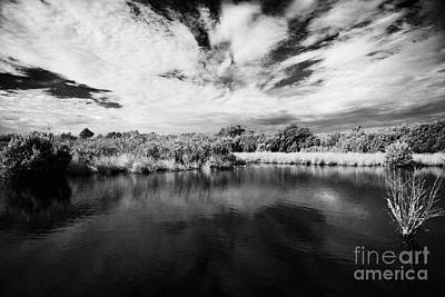 Flooded Grasslands And Mangrove Forest In The Florida Everglades Usa Print by Joe Fox