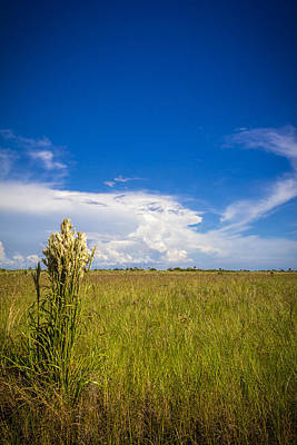 Sand Dunes Photograph - Florida Flat Land by Marvin Spates