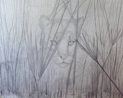 Panther Drawing - Florida Panther - Watching by PJ Jackson