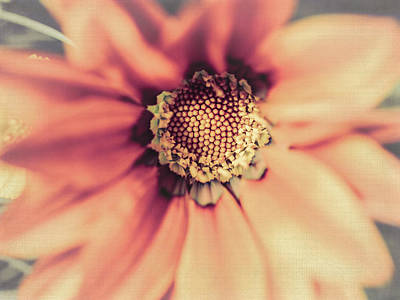 Flower Beauty II Print by Marco Oliveira