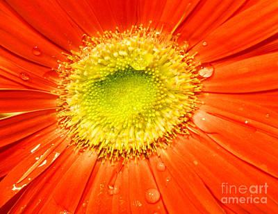 Arrangement Photograph - Flower Closeup by Michal Bednarek