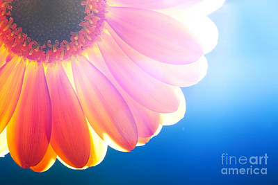 Bloom Photograph - Flower Closeup Sunlight From Behind by Michal Bednarek