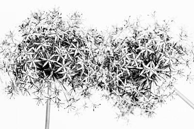 Florets Photograph - Flowering Onions by Elena Elisseeva