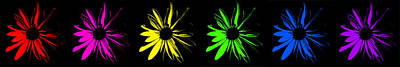 Creation Digital Art - Flowers On Black by Maggy Marsh