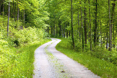 Kentucky Photograph - Forest Road by Alexey Stiop