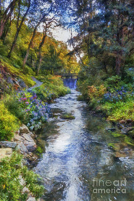 Forest Stream Print by Ian Mitchell