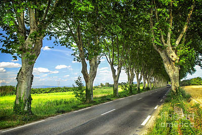 Asphalt Photograph - French Country Road by Elena Elisseeva