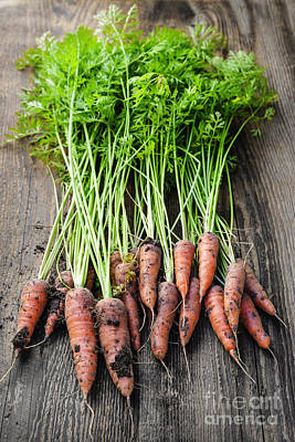 Rustic Photograph - Fresh Carrots From Garden by Elena Elisseeva