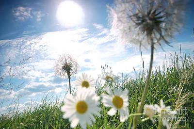Fresh Meadow Background Print by Michal Bednarek