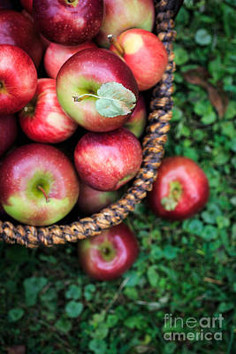 Baskets Photograph - Fresh Picked Apples by Edward Fielding