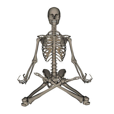 Costae Spuriae Photograph - Front View Of Human Skeleton Meditation by Elena Duvernay