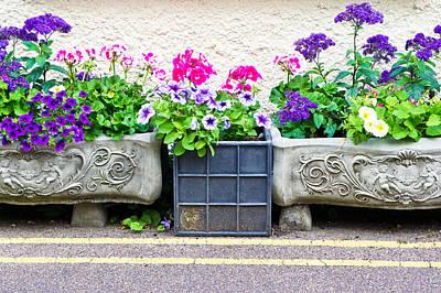 Violet Photograph - Garden Plants by Tom Gowanlock