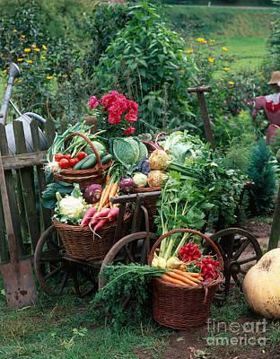 Outdoor Still Life Photograph - Garden Vegetable Still-life by Hans Reinhard