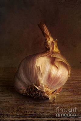 Macro Digital Art - Garlic 2 by Elena Nosyreva