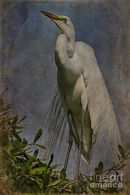 Egret Mixed Media - Giant Beauty by Deborah Benoit