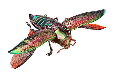Central American Wildlife Photograph - Giant Jewel Beetle by Natural History Museum, London