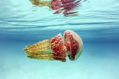 Golden Jellyfish Print by Ethan Daniels