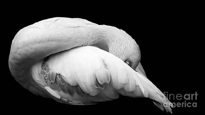 Flamingos Photograph - Grace by Rebecca Cozart