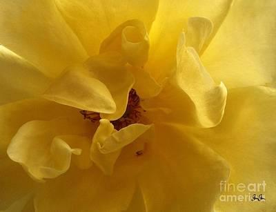 Gracefully Yellow Print by Geri Glavis