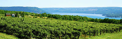 Finger Lakes Photograph - Grape Vineyards In Finger Lake Region by Panoramic Images