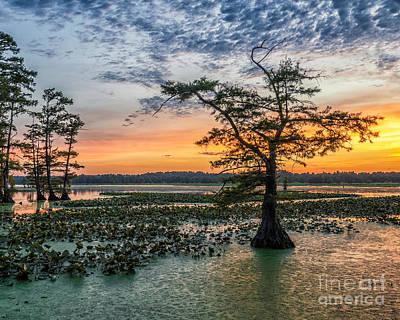 Cypress Swamp Photograph - Grassy Island Sunset by Anthony Heflin