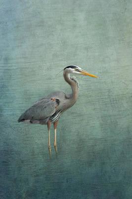 Great Blue Heron Print by Kim Hojnacki