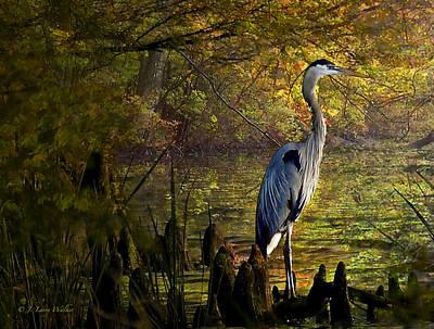 Great Blue Heron Wading Print by J Larry Walker