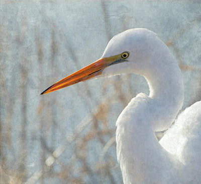 Great Egret Print by Angie Vogel