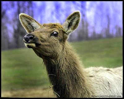 Roaming Elk Photograph - Great Michigan Elk by LeeAnn McLaneGoetz McLaneGoetzStudioLLCcom
