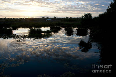 Green Cay Wetlands, Fl Print by Mark Newman