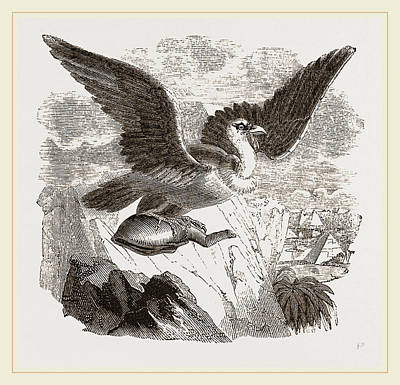Vulture Drawing - Griffon Vulture by Litz Collection