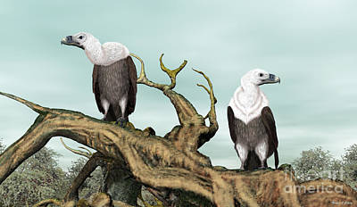 Vulture Mixed Media - Griffon Vultures by Walter Colvin