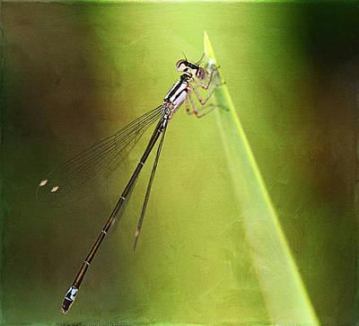 Macro Dragonfly Photograph - Growth Spurt by Fraida Gutovich