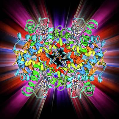 Molecular Structure Photograph - Haemoglobin Molecule by Laguna Design