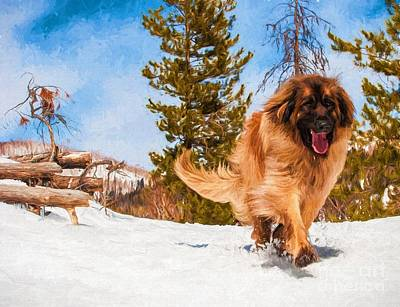 Happy Leonberger Winter Trail Running Print by Gary Whitton