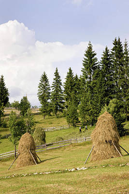 Hay Harvest And Haystack In The Apuseni Print by Martin Zwick