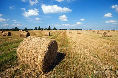 Hay Photograph - Haystacks In The Field by Michal Bednarek